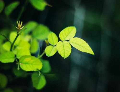 树叶转成动物的图片